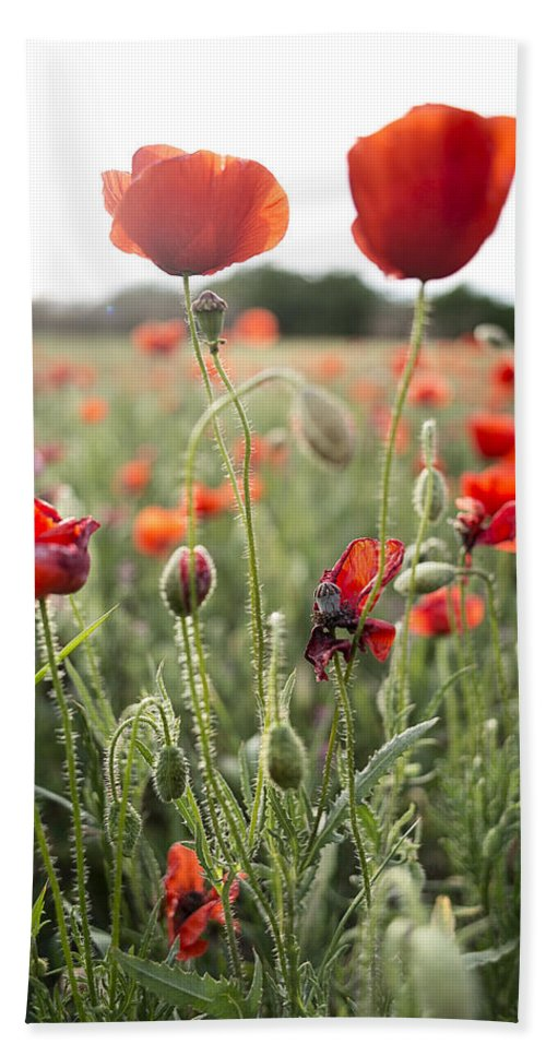 Poppies Hand Towel featuring the photograph Papaver Rhoeas by David Ortega Baglietto
