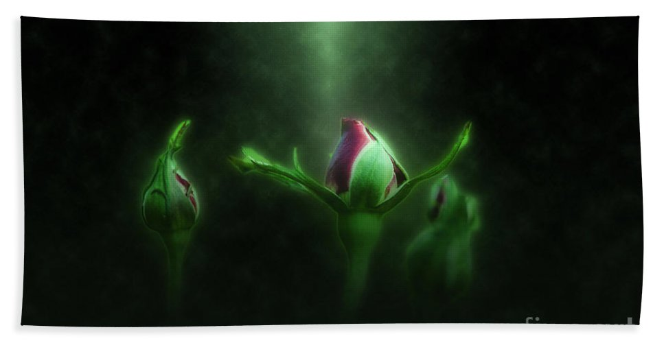 Illuminated Bath Sheet featuring the photograph Red Rose Bud by Humorous Quotes
