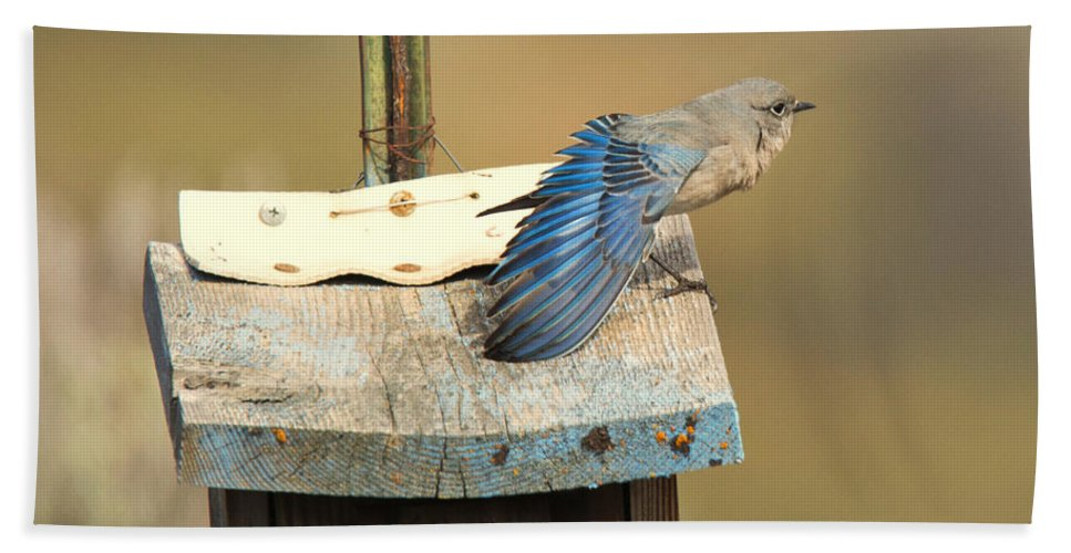 Mountain Bluebird Hand Towel featuring the photograph Spread Your Wings by Mike Dawson