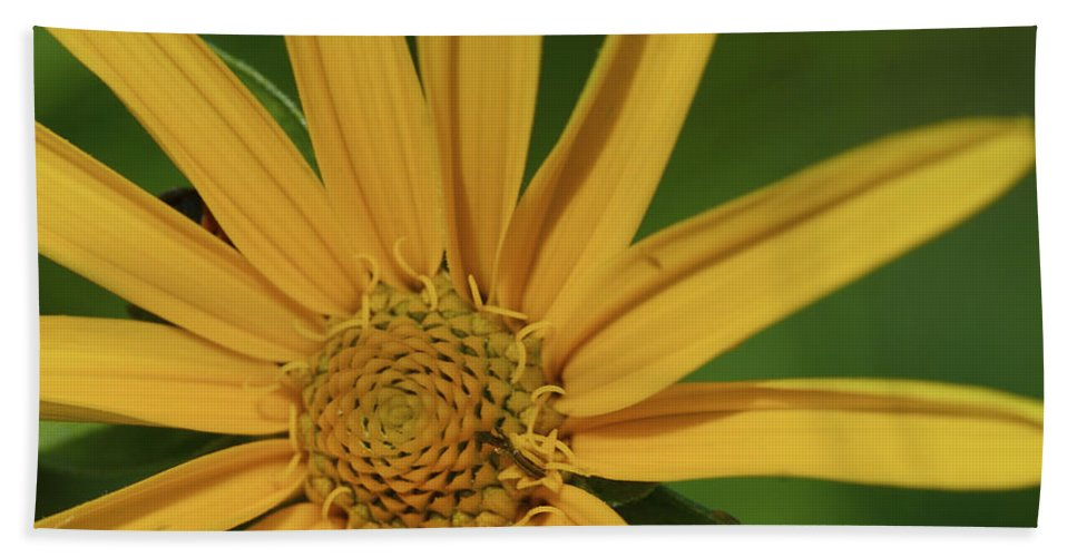 Beautiful Hand Towel featuring the photograph Sunflower by Jack R Perry