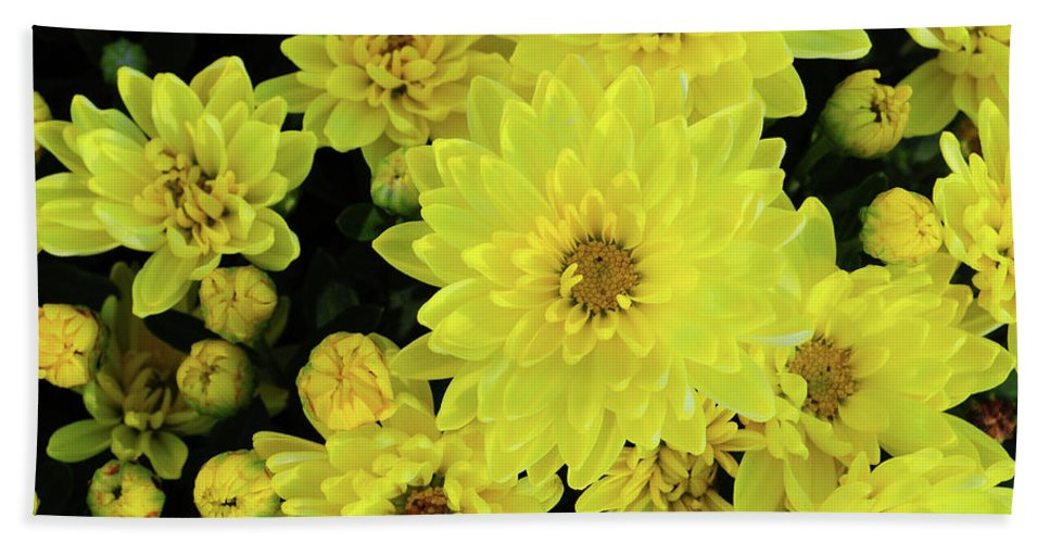 Fall Bath Sheet featuring the photograph Sunshine Smiles by JAMART Photography