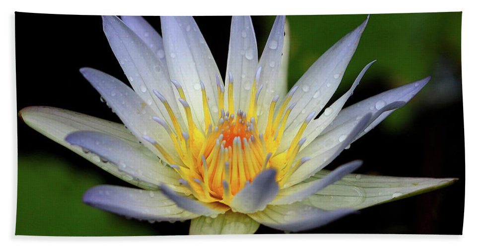 Naples Botanical Butterflies And Flowers Hand Towel featuring the photograph Water Lily by Dennis Goodman