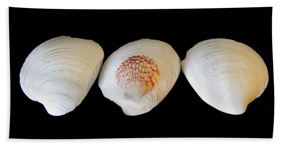 Seashell Hand Towel featuring the photograph 3 White Shells by Angela Murdock