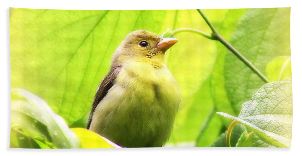 Tanager Bath Sheet featuring the photograph 3154 - Tanager by Travis Truelove