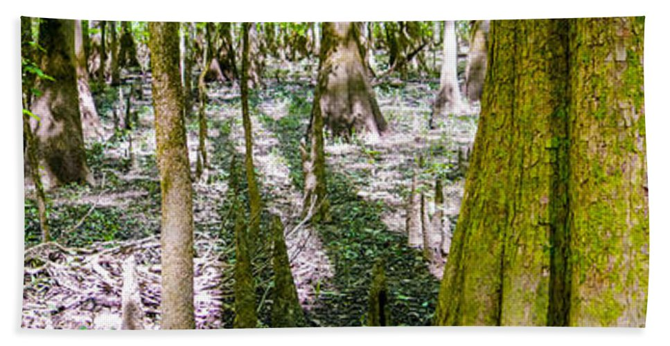 Carolina Hand Towel featuring the photograph cypress forest and swamp of Congaree National Park in South Caro by Alex Grichenko