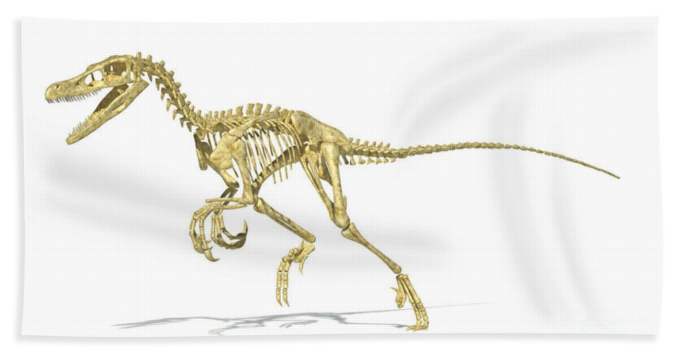 Three Dimensional Bath Sheet featuring the digital art 3d Rendering Of A Velociraptor Dinosaur by Leonello Calvetti