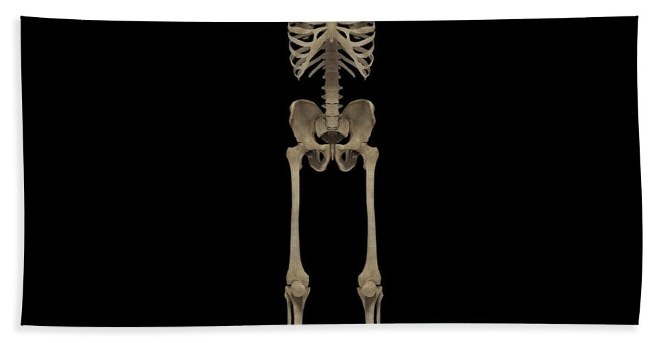 No People Bath Sheet featuring the digital art 3d Rendering Of Human Skeletal System by Stocktrek Images