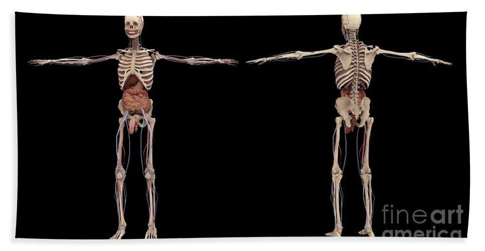 Biomedical Illustrations Bath Sheet featuring the digital art 3d Rendering Of Human Skeleton by Stocktrek Images
