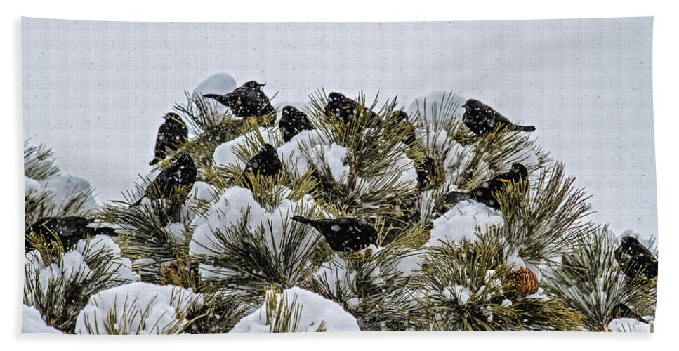 Bird Bath Sheet featuring the photograph 4 And 20 Blackbirds by Alana Thrower