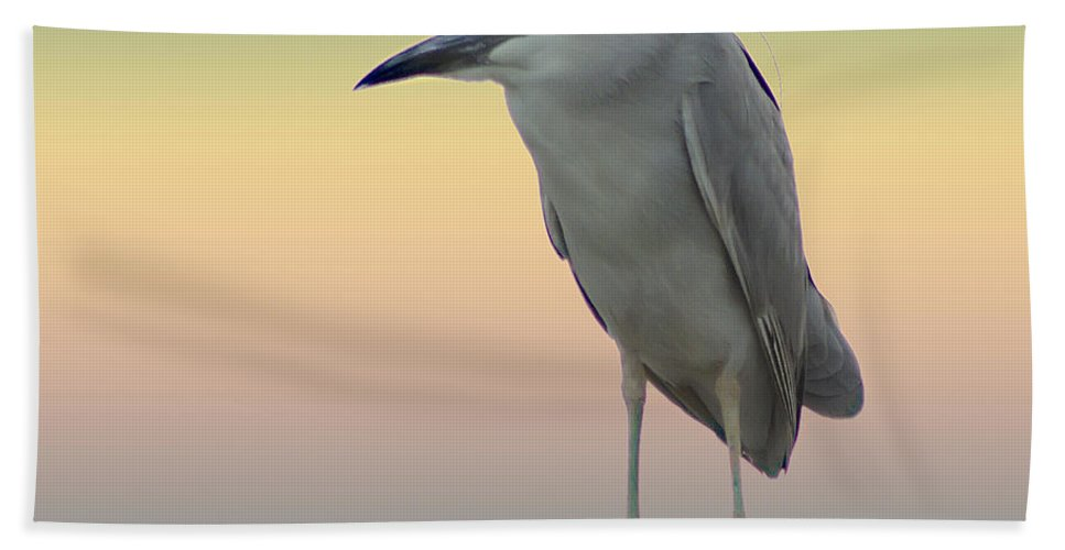 2d Hand Towel featuring the photograph Black-crowned Night Heron by Brian Wallace