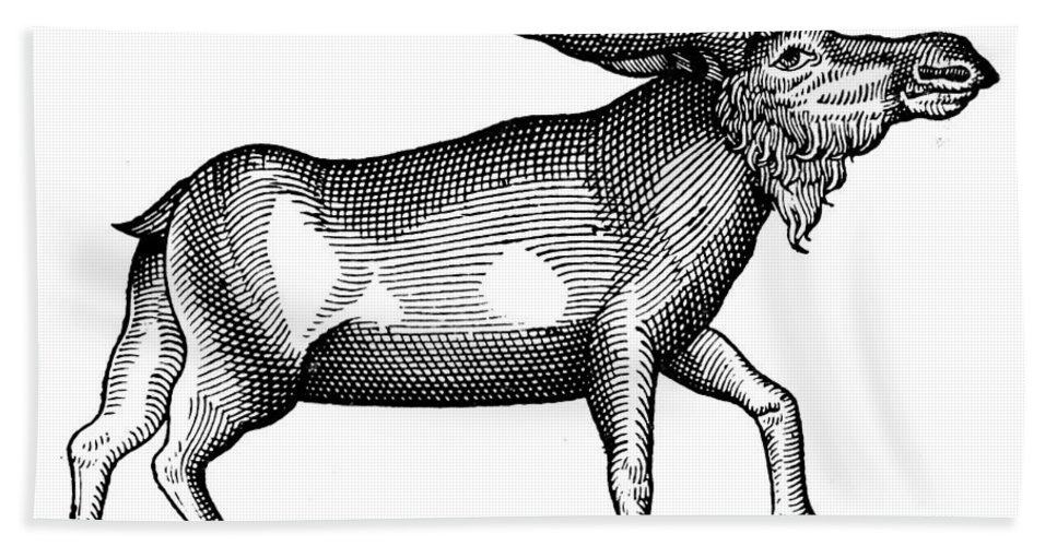 1607 Bath Sheet featuring the photograph Elk/moose by Granger