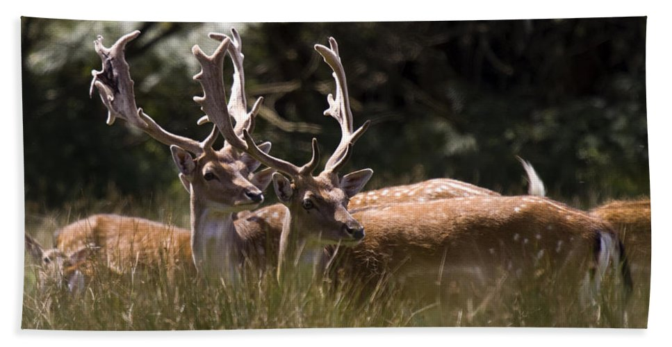 Fallow Deer Bath Towel featuring the photograph Fallow Deer by Angel Ciesniarska