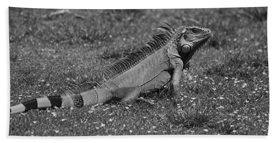 Macro Bath Sheet featuring the photograph I Iguana by Rob Hans