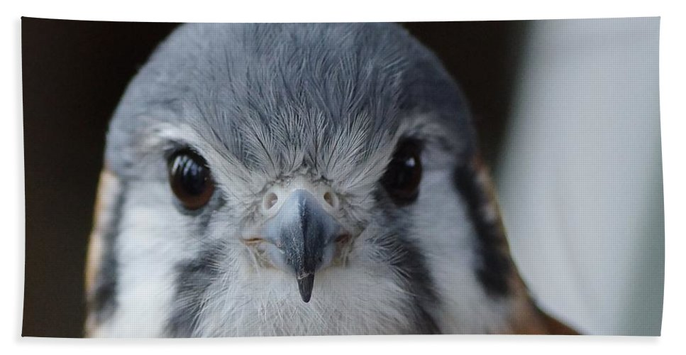 Birds Hand Towel featuring the photograph Looking Good by Jeffery L Bowers