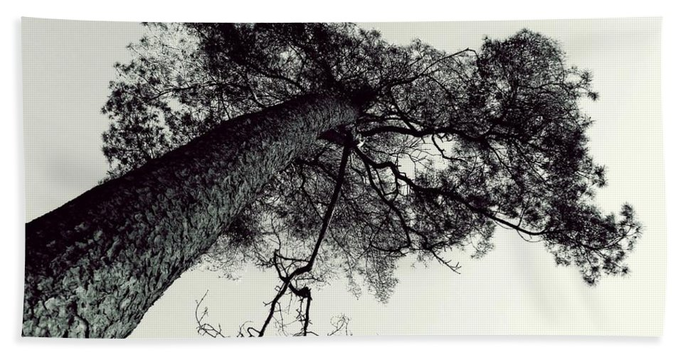 Tree Bath Sheet featuring the photograph Trees And Sky by FL collection