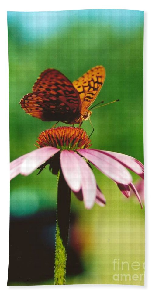 #416 14a Butterfly Coneflower Lunch Break Hand Towel featuring the photograph #416 14a Butterfly Fritillary, Coneflower Lunch Break Good Till The Last Drop by Robin Lee Mccarthy Photography