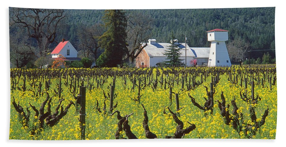 Mustard Hand Towel featuring the photograph 4b6394 Mustard In The Vineyards by Ed Cooper Photography