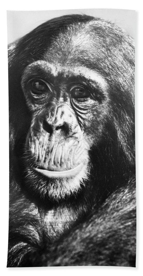 20th Century Bath Sheet featuring the photograph Chimpanzee by Granger