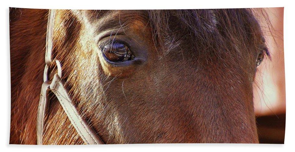 Horse Bath Sheet featuring the photograph Morgan Horse by JAMART Photography