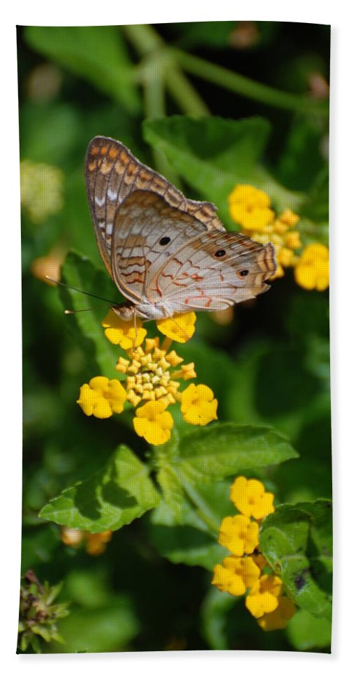 Butterfly Bath Sheet featuring the photograph 5 Yellow Flowers And A Buttefly by Rob Hans