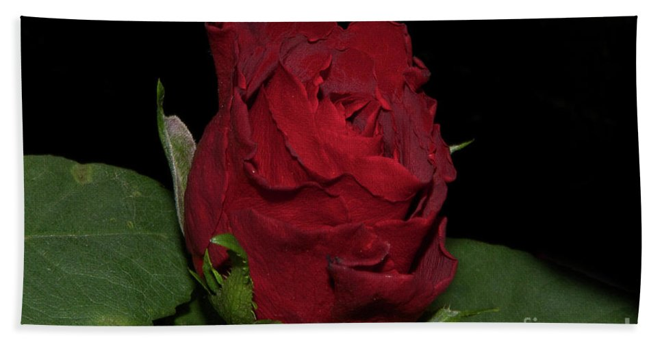 Flowers Bath Towel featuring the photograph Red Rose by Elvira Ladocki