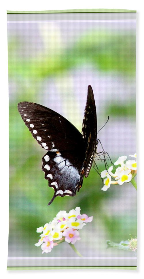 5276-001 Bath Sheet featuring the photograph 5276-001- Butterfly - Swallowtail by Travis Truelove
