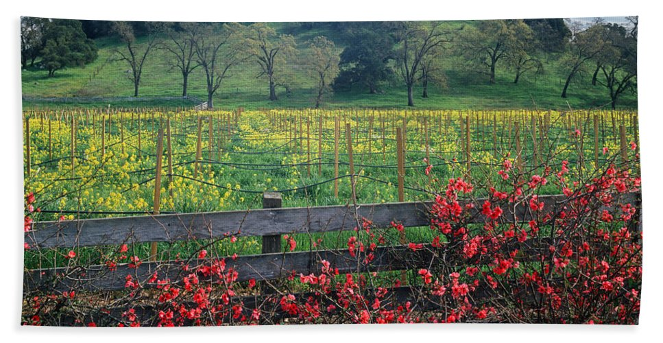 Mustard Hand Towel featuring the photograph 5b6301 Vineyards Of Color by Ed Cooper Photography
