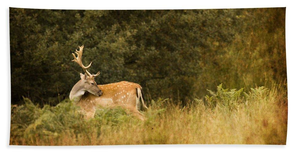 Fallow Deer Hand Towel featuring the photograph Fallow Deer by Angel Tarantella