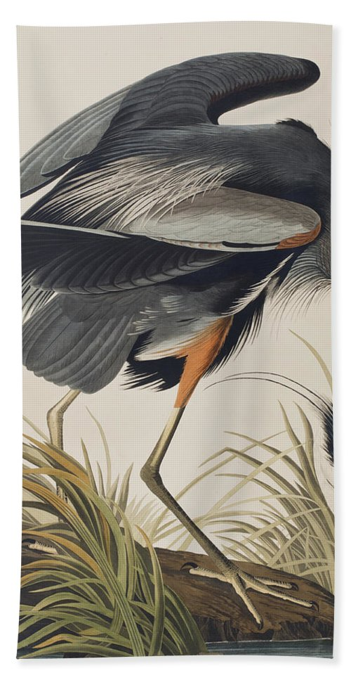 Great Blue Heron Hand Towel featuring the painting Great Blue Heron by John James Audubon