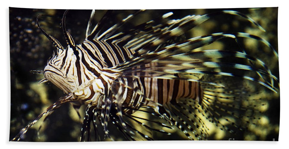 Water Hand Towel featuring the photograph Tropical Fish by Gunnar Orn Arnason