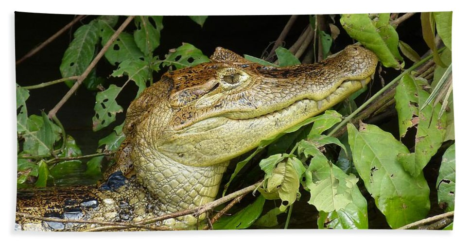 Animal Hand Towel featuring the photograph Crocodile by FL collection