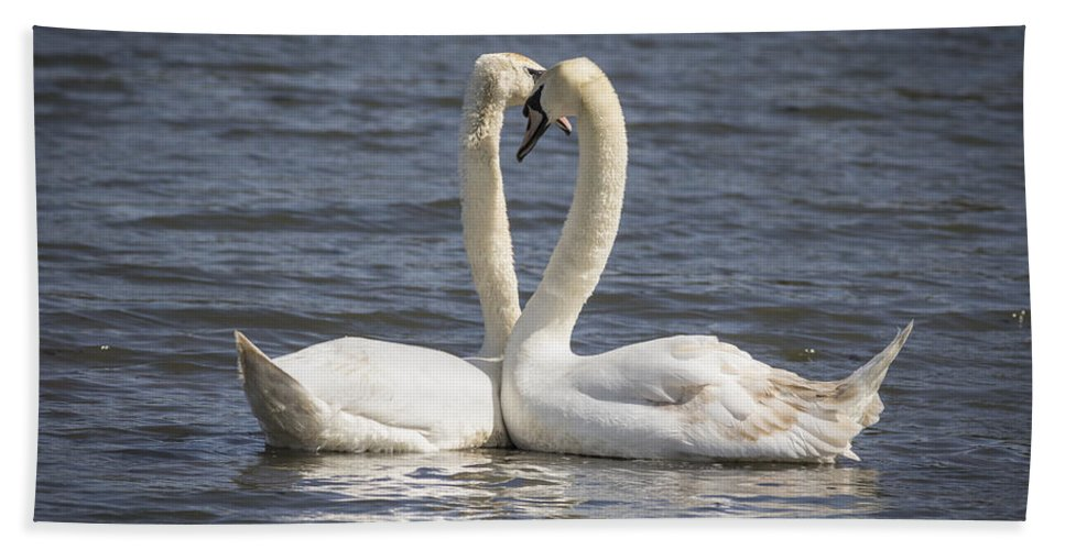 Swan Bath Sheet featuring the photograph Swan -- by Chris Smith