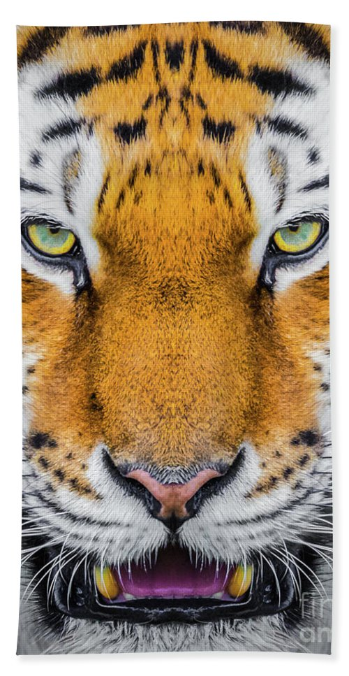 Tiger Hand Towel featuring the photograph Tiger by Shaun Wilkinson
