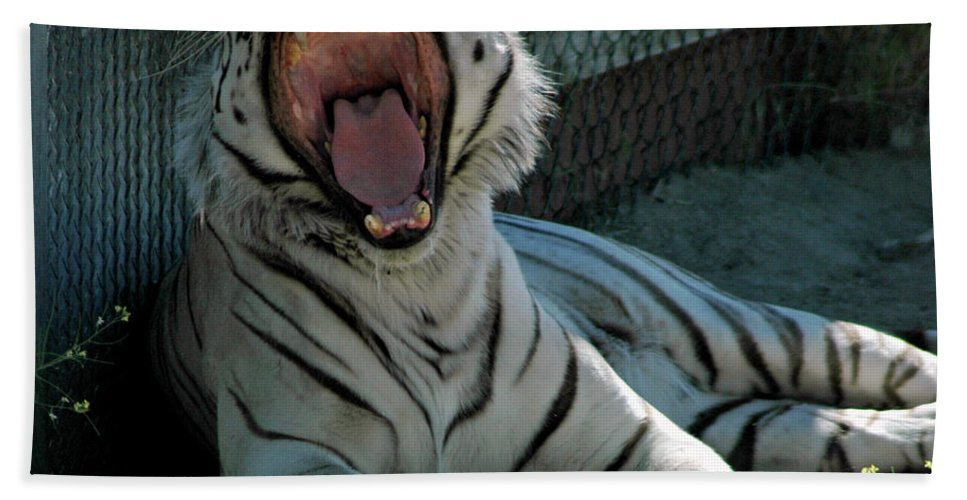 Usa Bath Sheet featuring the photograph White Tiger by LeeAnn McLaneGoetz McLaneGoetzStudioLLCcom