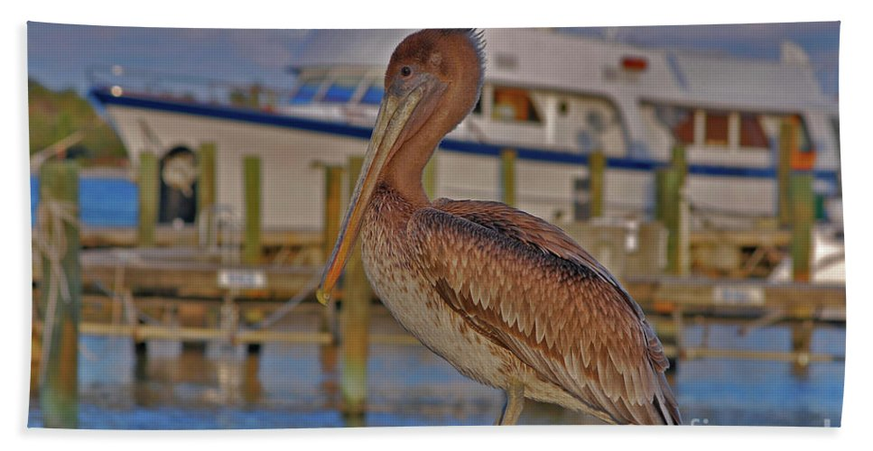 Brown Pelican Bath Sheet featuring the photograph 8- Brown Pelican by Joseph Keane