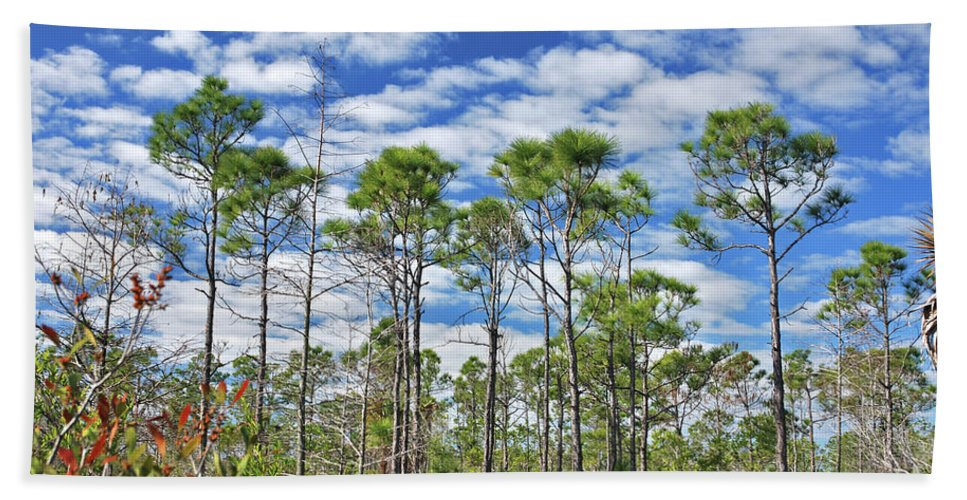 Cypress Trees Bath Sheet featuring the photograph 8- Cypress Sky by Joseph Keane