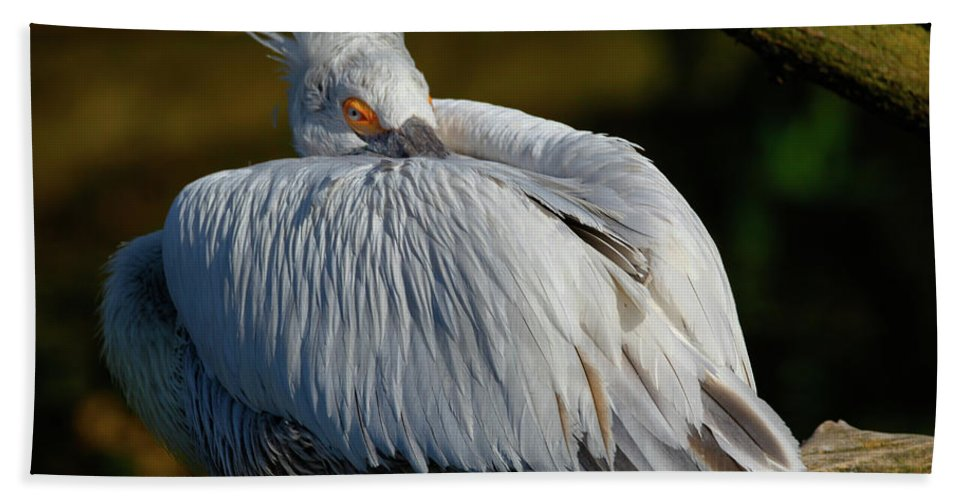 Bird Hand Towel featuring the photograph Bird by Hristo Shanov