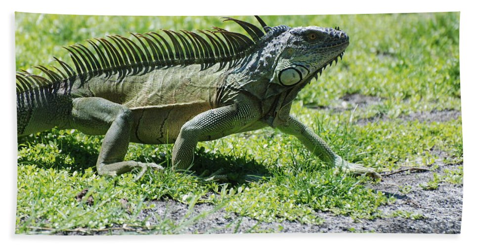 Macro Hand Towel featuring the photograph I Iguana by Rob Hans