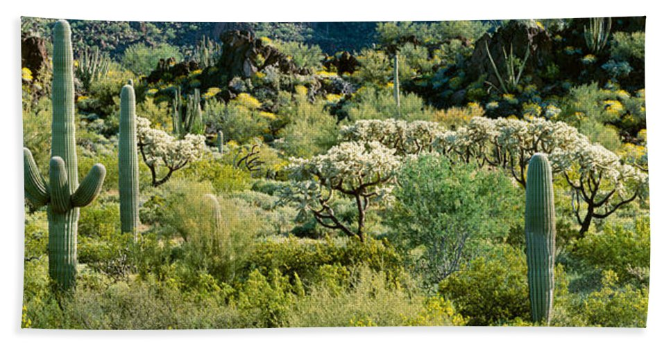 Photography Bath Sheet featuring the photograph Saguaro Cactus Carnegiea Gigantea by Panoramic Images