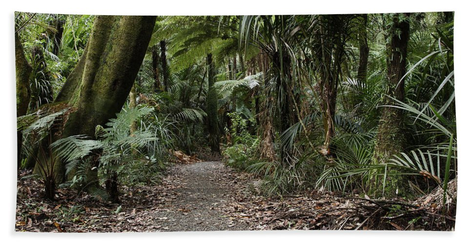 Jungle Bath Sheet featuring the photograph Walking Trail by Les Cunliffe