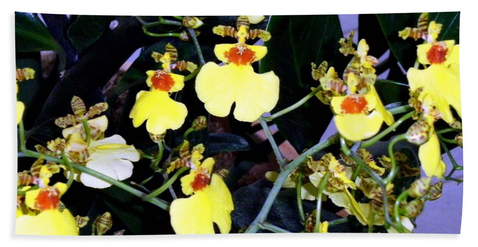 Orchids Hand Towel featuring the photograph A Ballet Of Tiny Orchids by Mindy Newman