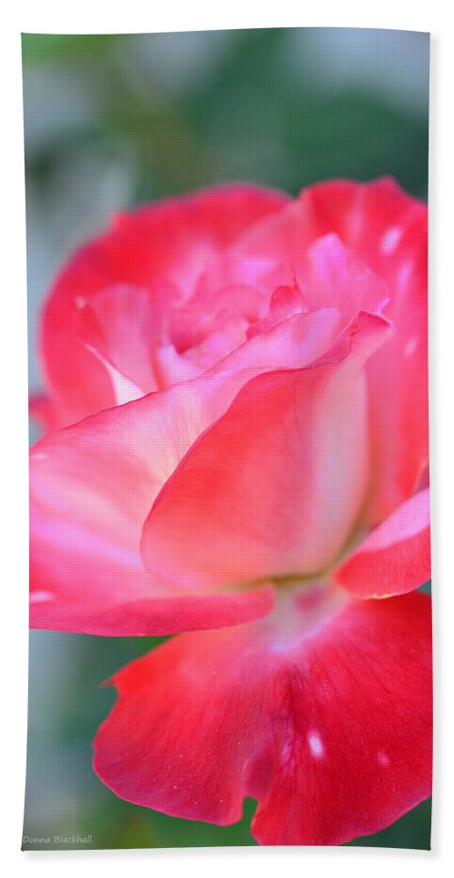Rose Hand Towel featuring the photograph A Beautiful Evening Awaits by Donna Blackhall