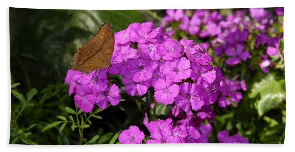 Butterfly Hand Towel featuring the photograph A Beautiful Landing by David Lee Thompson