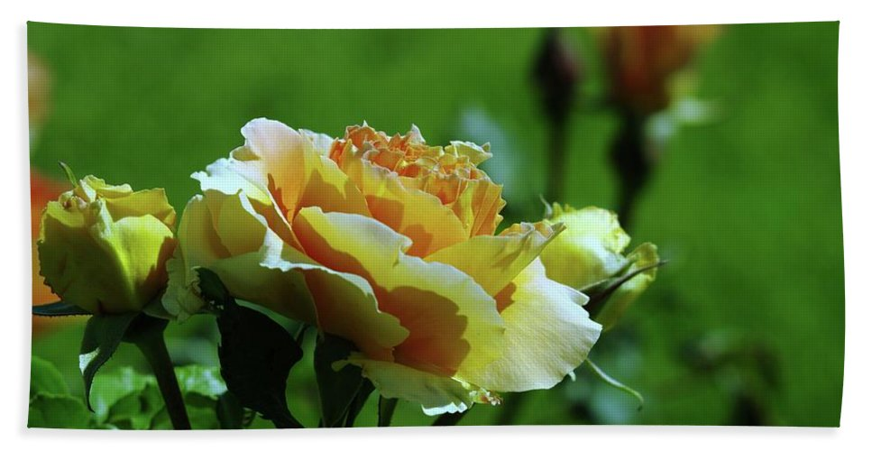 Roses Bath Towel featuring the photograph A Benton City Rose by Jeff Swan