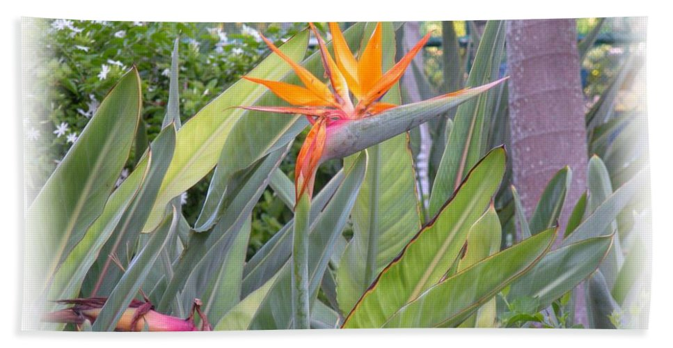 Plant Bath Towel featuring the photograph A Bird In Paradise by Maria Bonnier-Perez