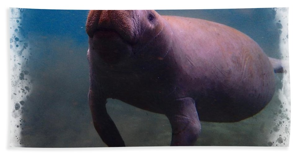 Manatee Family 1 Hand Towel featuring the photograph A Bit Of Air by Sheri McLeroy