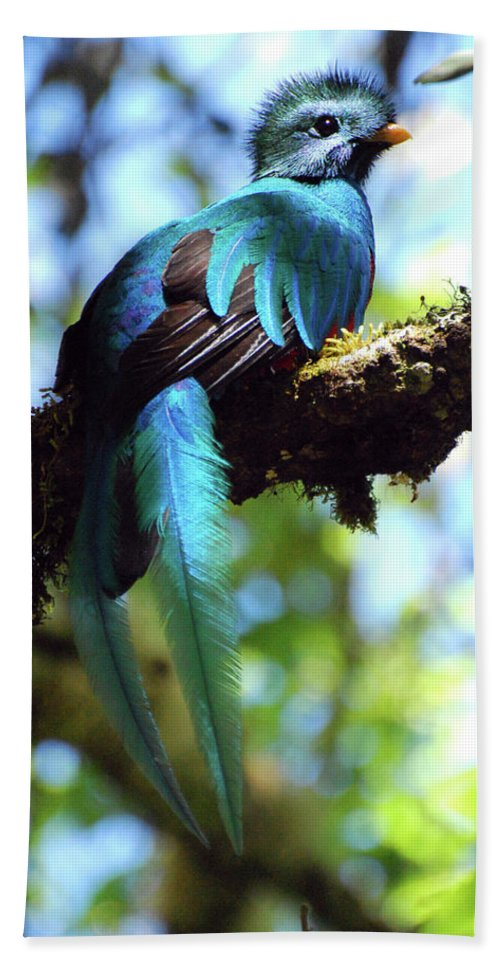 Bird Hand Towel featuring the photograph A Blue Stand Out by Wes Hanson