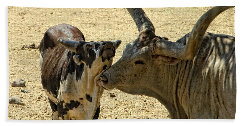 Cow Hand Towel featuring the photograph A Bovine Love by Donna Blackhall