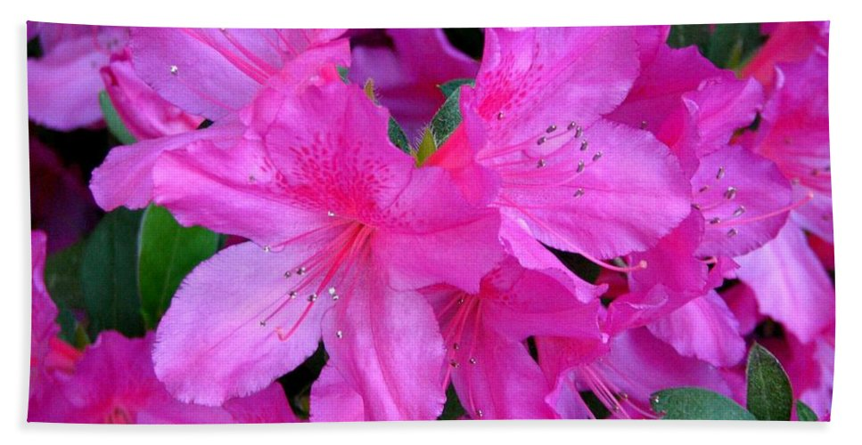 Azalea Hand Towel featuring the photograph A Burst Of Pink by J M Farris Photography