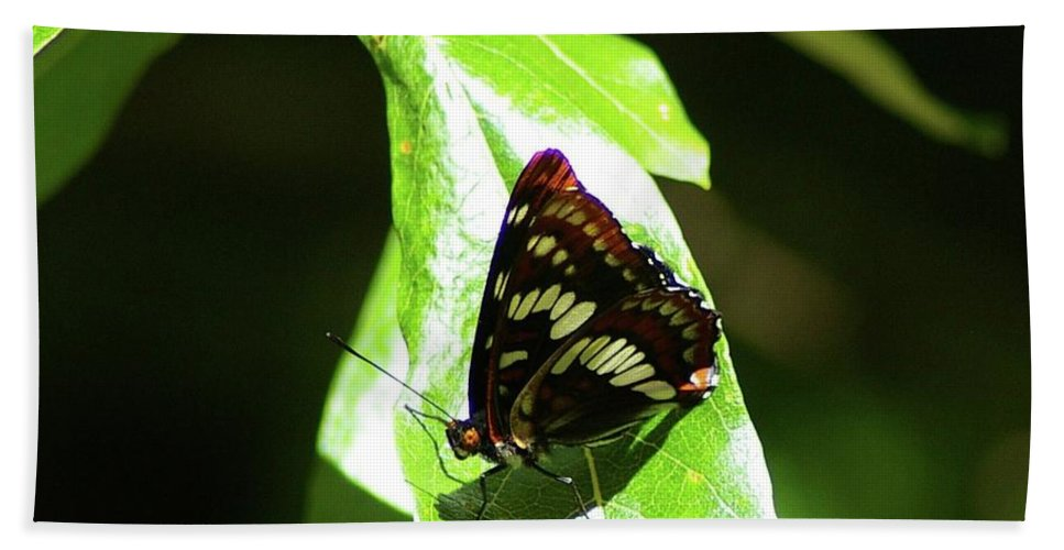Butterfly Bath Sheet featuring the photograph A Butterfly In The Sun by Jeff Swan